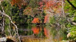 Autumn colors around Nikko
