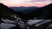 Izumidani rice terrace