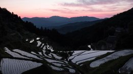 Izumidani rice terrace