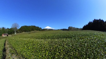 Green tea fields and Mt. Fuji – 360 degrees