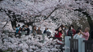 Imperial Palace East Gardens (The Sakura Guide)