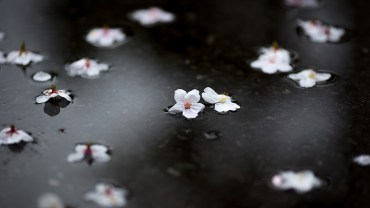 Rikugien Garden (The Sakura Guide)