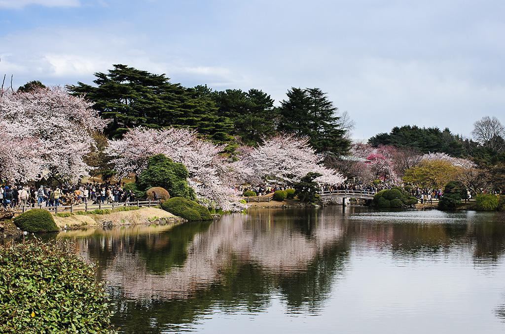 Hamarikyu Gardens (The Sakura Guide)