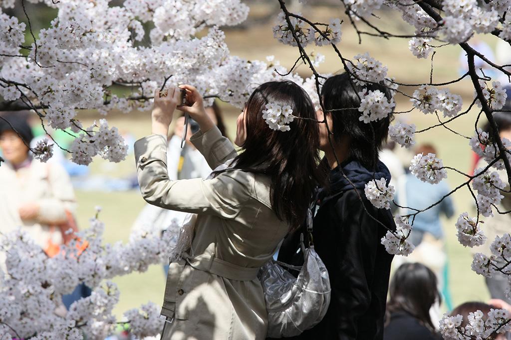Hibiya Park (The Sakura Guide)