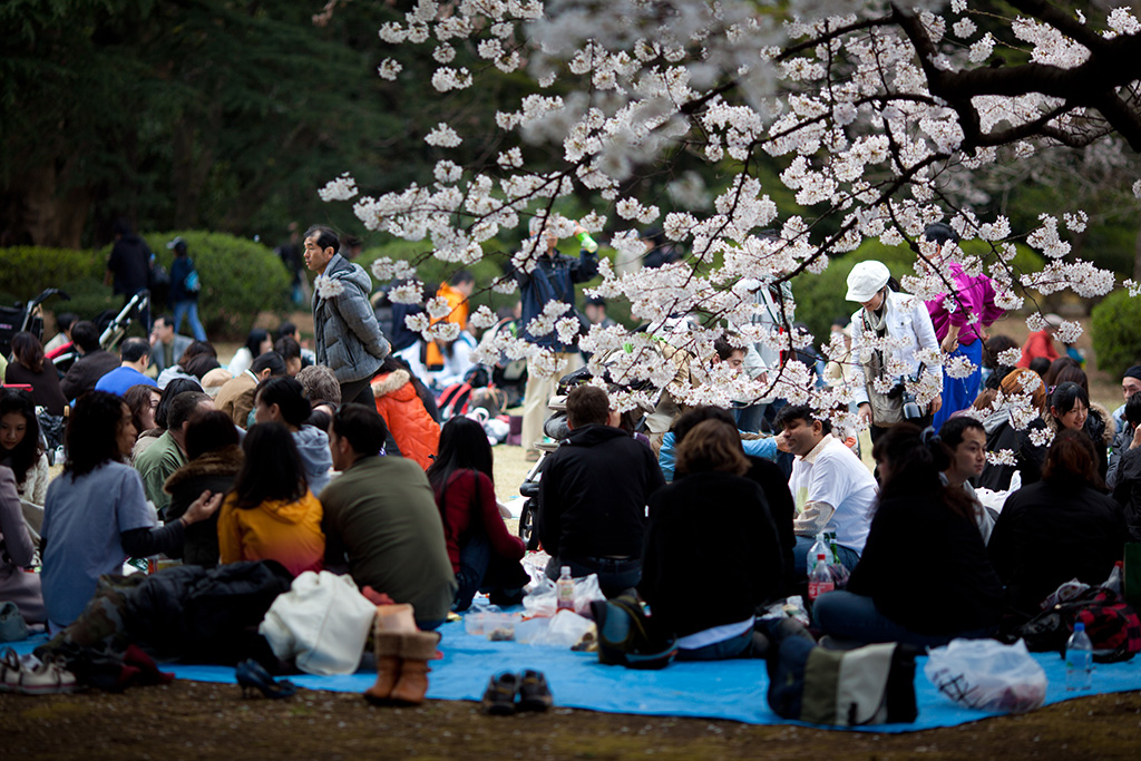 Komazawa Olympic Park (The Sakura Guide)