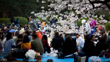 Komazawa Olympic Park (The Sakura Guide)