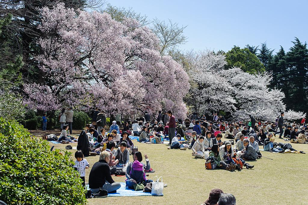 Shinjuku Gyoen National Garden (The Sakura Guide)