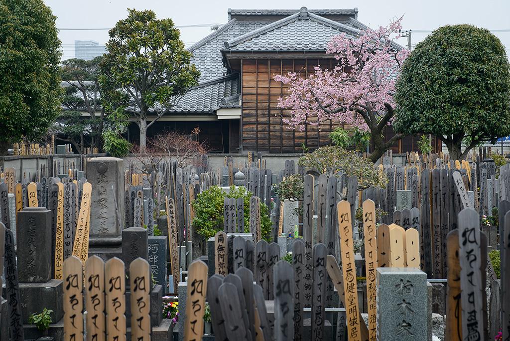 Yanaka Cemetery (The Sakura Guide)