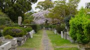 Tokyo-Aoyama-Cemetery