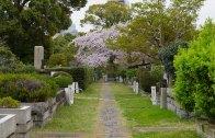 The Cherry Blossoms of Chidorigafuchi by Night