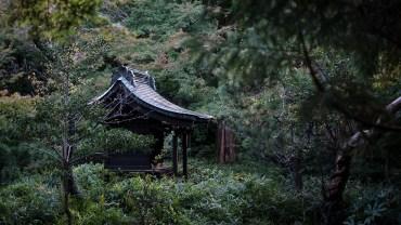 Little shrines everywhere