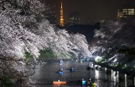 The Cherry Blossoms of Chidorigafuchi by Night