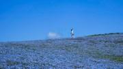 Feeling blue at Hitachi Kaihin Koen