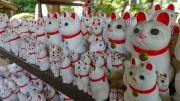 [360 Video] Gotokuji, the Cat Temple