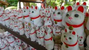[360 Video] Gotokuji, the Cat Temple