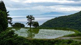 [Sado Island] Iwakubi Shoryu Rice Terraces