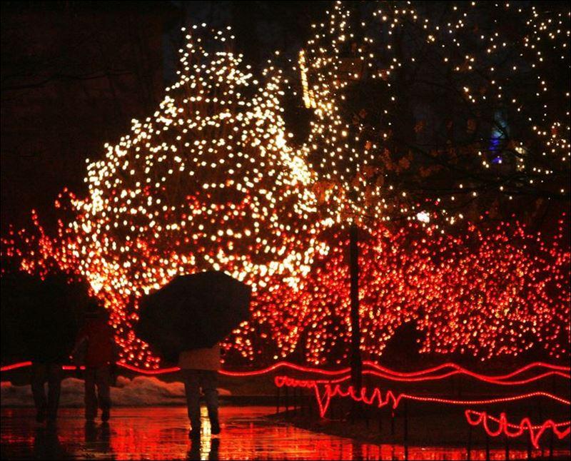Toledo Zoo Christmas Lights Admission