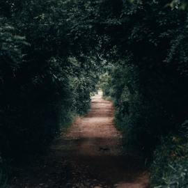 pathway-between-trees-2909250