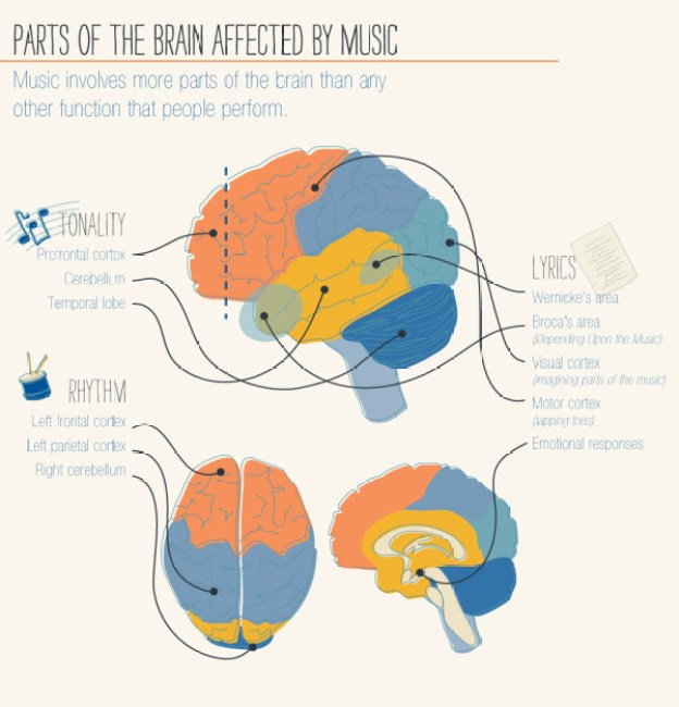 musical parts of the brain