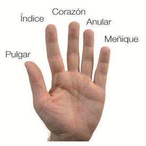 Significado De Los Dedos De La Mano Escucha Tomatis Y Terapias Naturales