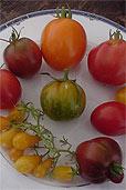 Neun verschiedene Tomaten (Bildquelle: Henry)