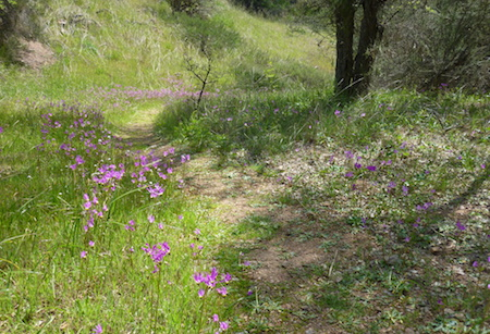 North Flowery Trail