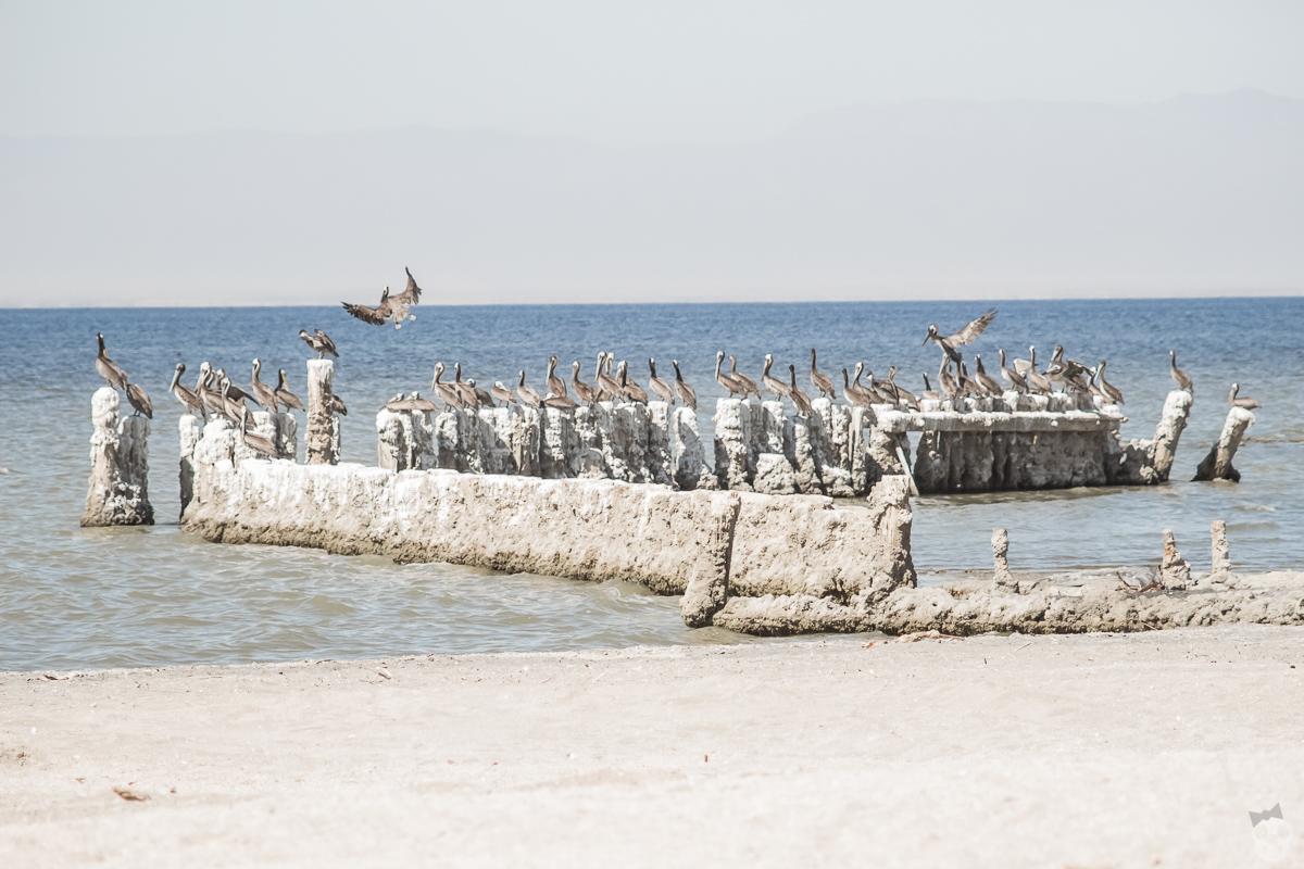 Bombay Beach in Salton Sea ソルトン湖 ボンベイビーチ