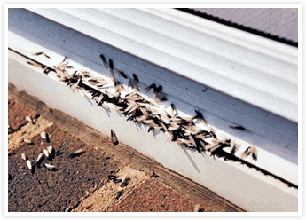 Termite Wood Damage Repair in Orange County