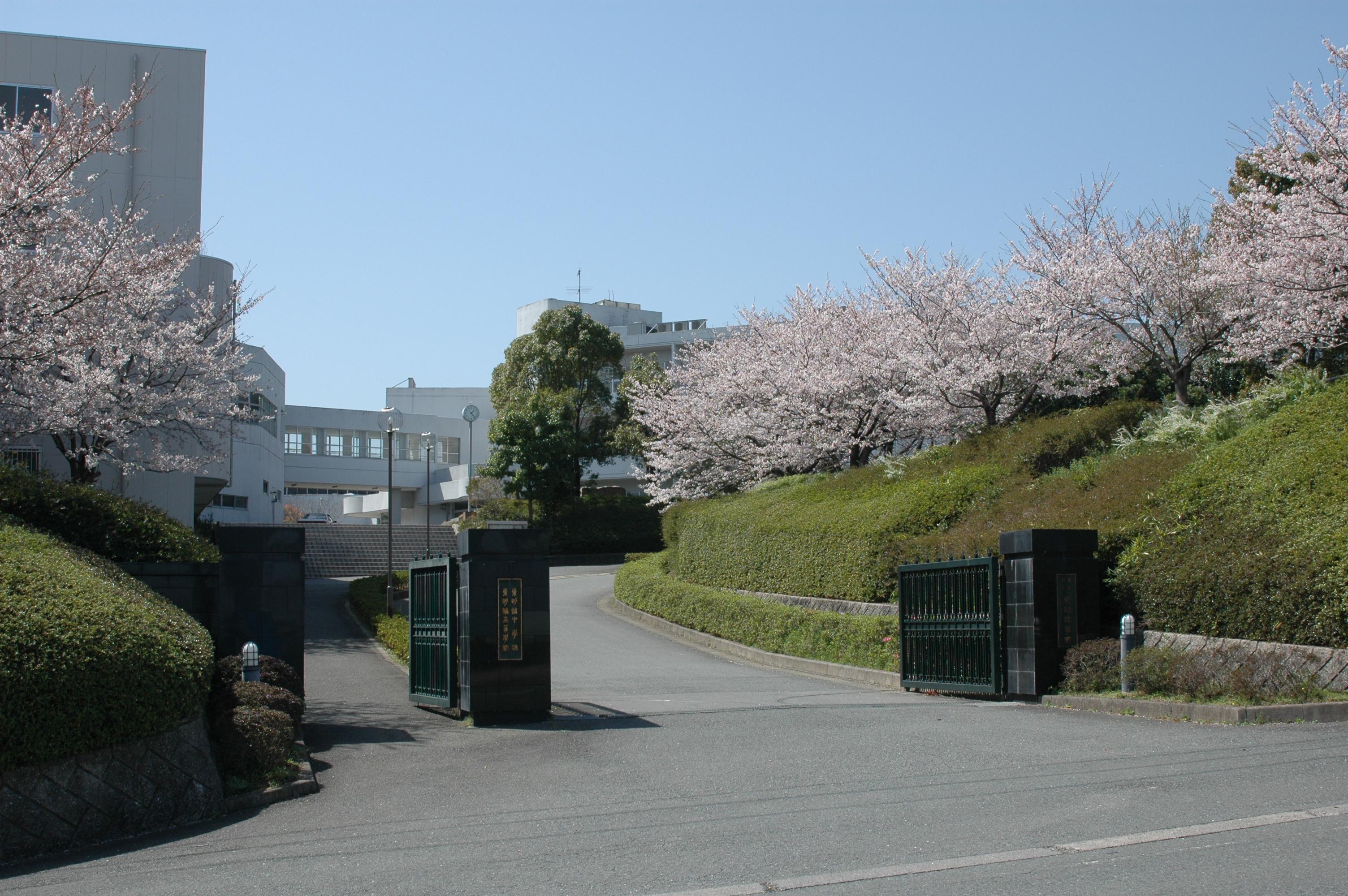 春の正門(正門の桜並木)