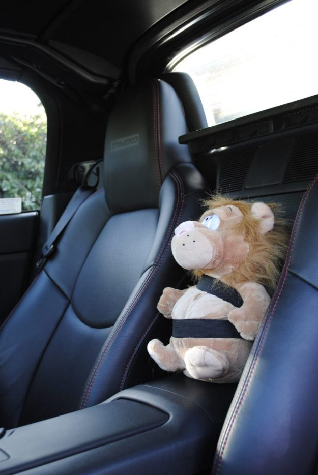 Car Lion All Strapped In