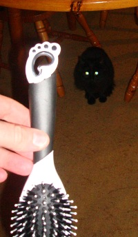 A photo of our cat with a hair brush with the Gnome Logo on it