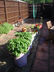 Growing Veg in garden