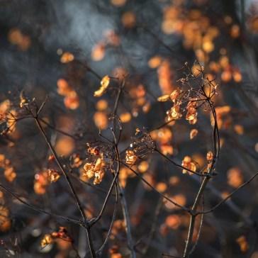 Lidt hygge billeder fra efteråret og vinter 2018. 5