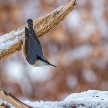 Lige lidt fugle i Gribskov. 3