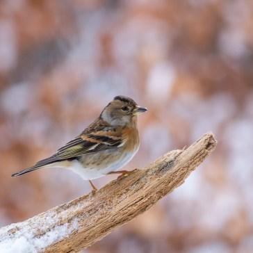 Lige lidt fugle i Gribskov. 1