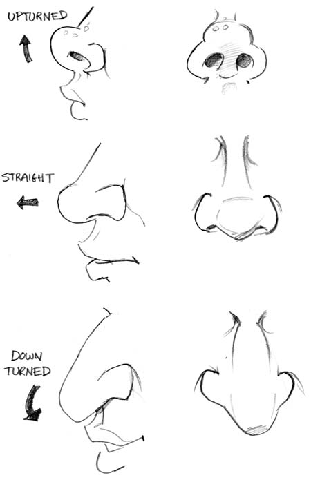 Line Drawing Nose : Richmond illustration inc