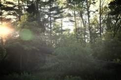 Fallen Pines (3)