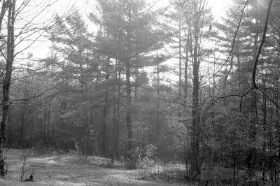 Forest Sunrise (4)