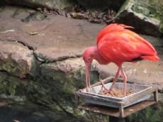 San Antonio Zoo 22