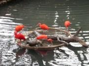 San Antonio Zoo 23