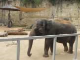 San Antonio Zoo 27