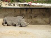 San Antonio Zoo 28