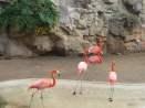 San Antonio Zoo 3