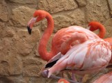 San Antonio Zoo 5