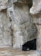 San Antonio Zoo 8