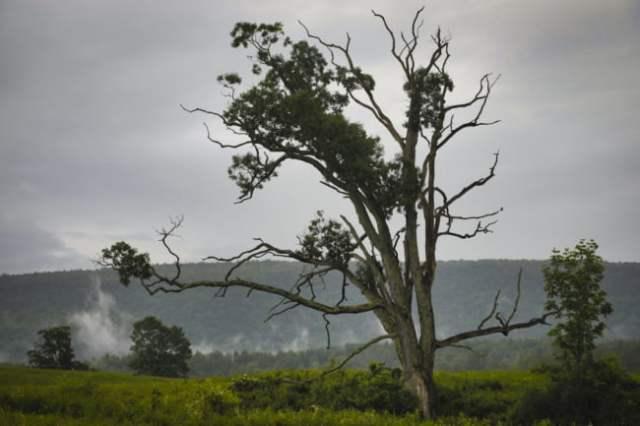 Big Tree In The Rain
