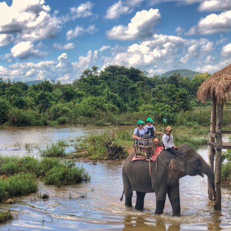 elephants in the water at Lak Lake