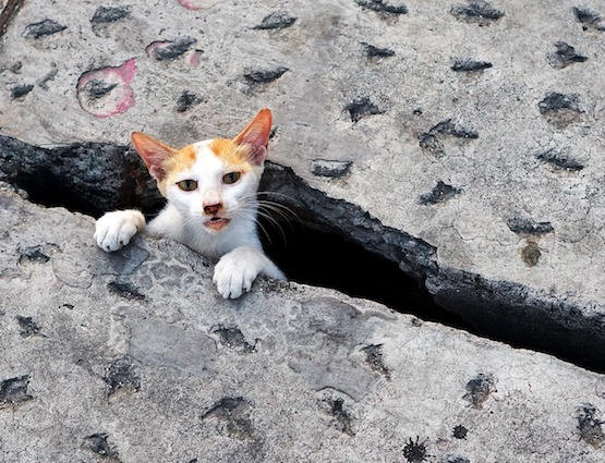 kitten stuck