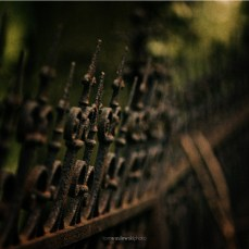 cosel_cemetery_1_07