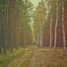 forest_1_10